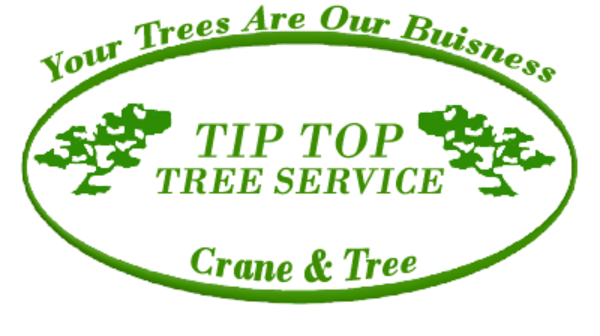 Tip Top Tree Service - 10.02.20
