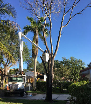 Affordable Tree Service Inc. - Tree Service Miami - 23.07.18