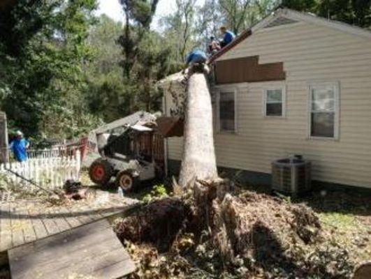Timber Pro's Tree Service - 30.05.19