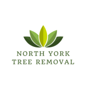 Tree Removal North York - 08.07.18