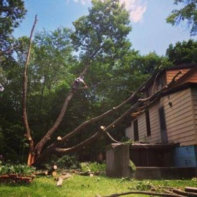 Services d'arbres Watson Inc. - 17.12.18