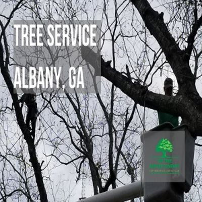 Top Tree Service Company - 10.01.20
