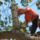 Best Tree Service Rockford - 28.05.16