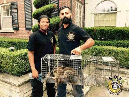 SOS Wildlife Control - 16.11.18