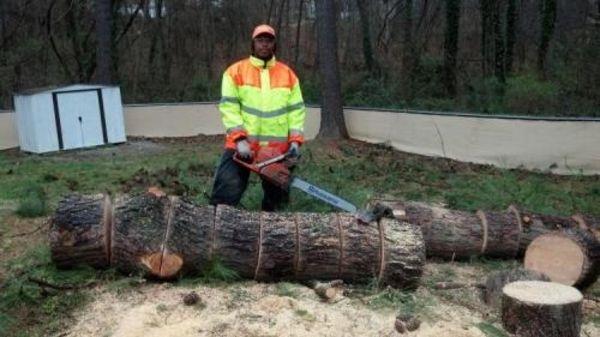 Geddie's Tree Service - 17.04.18